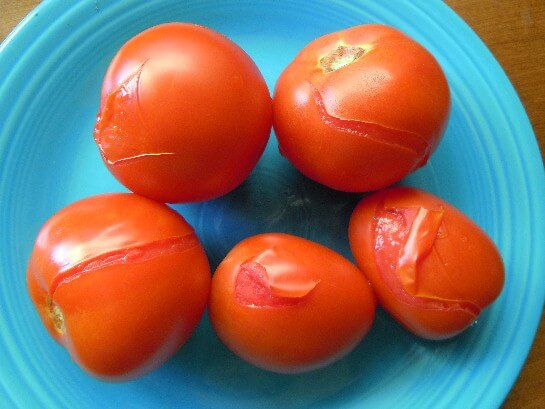 Tomatoes flash boiled with their skin ready to be peeled off.