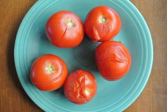 Chunky Tomato Salsa showcases five big fat tomatoes on a turquoise plate after they have split and are ready to peel.