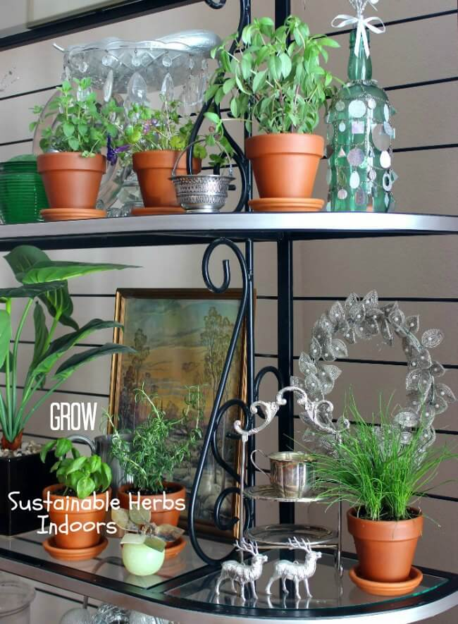 Grow Sustainable Herbs Indoors so that you can enjoy a healthy hobby, save money at the grocery store and have herbs at your fingertips.